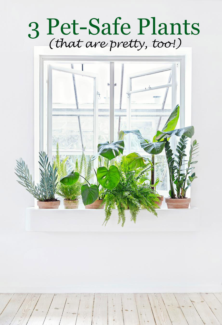 3 Pet Safe Plants That Are Pretty Too Polished Closets
